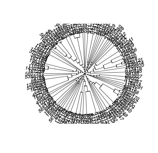 circular dendrogara